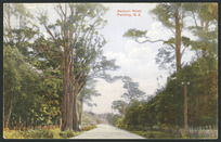 [Postcard]. Awahuri Road, Feilding, N.Z. Dominion of New Zealand. Industria post card (carte postale). Printed in Germany. Protected no. 1696 [1909]