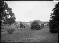 Waerenga Government Farm, circa 1910s