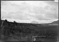 Mount Ngauruhoe in eruption, 1909
