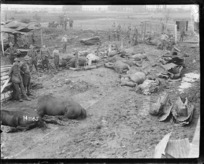 Horses killed in a German bombing raid