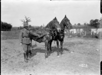 New Zealand officer holding the reins of two German horses at Louvencourt, France, World WarI