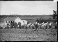 Waerenga Government Farm, circa 1910s