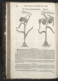 The herball or Generall historie of plantes. Gathered by Iohn Gerarde of London Master in Chirurgerie