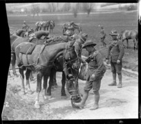 Feeding the horses of a howitzer brigade, World War I