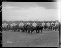New Zealand Artillery horse teams at Ewshot Camp, England