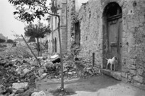 Dog by the door of a demolished house in Gessopalena, Italy