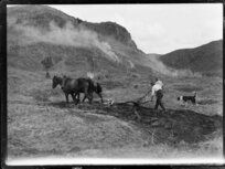 Ploughing with horses, King Country