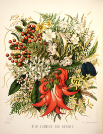 Featon, Sarah Anne, 1848-1927 :Wild flowers and berries. S. Featon Copyright. Bock and Cousins Chromo-Litho. [Wellington, 1889]