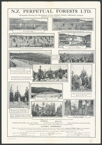 New Zealand Perpetual Forests Ltd: Photographs showing the development of New Zealand's premier afforestation company. Photographs taken August 1929. Wilson & Horton Limited, Auckland [1929]