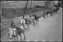 Mule train tended by Italian soldiers passes through streets of Castelfrentano, Italy, World War II - Photograph taken by George Kaye