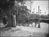 An ox cart travelling along a street in Cairo, Egypt - Photograph taken by George Kaye