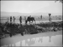 Rural scene with animals and children beside a canal near Tura, Egypt - Photograph taken by George Kaye