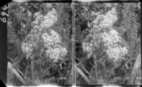 Native plants, unidentified location