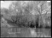 Junction of the Waitetuna River and Mangakino Stream, near Raglan Harbour, 1910 - Photograph taken by Gilmour Brothers