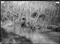 Mangakino Stream, near Raglan, 1910 - Photograph taken by Gilmour Brothers