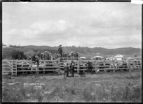View of farmers at a sale of cattle at the saleyards at Te Kuiti