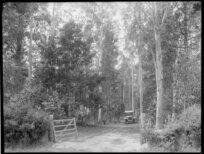 Selwyn Plantation, Canterbury