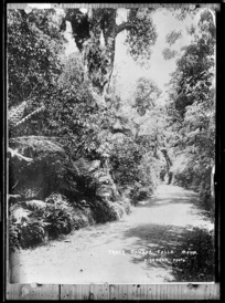 Track on Mt Egmont, in the Dawson Falls area - Photograph taken by Harry Graham