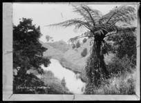 View of Lake Raupo, near Masterton