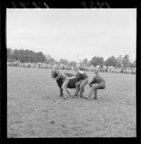 Unidentified men grappling with a small bull at the Raetihi rodeo