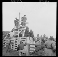 Men standing on a platform above a rearing horse at the Raetihi rodeo