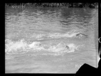 A race in progress at the New Zealand Division water sports, World War I
