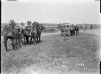 Tug of war with horses, New Zealand Artillery sports, Louvencourt