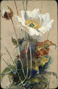 [Hodgkins, Isabel Jane] 1867-1950 :Many happy returns of the day. [Anemone. 1880s or early 1890s].
