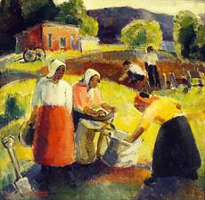 Gathering potatoes