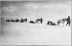 Ponies pulling sledges