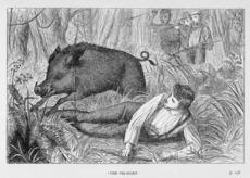 A pig hunt Ref: 1/2-053889-F