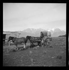 Cart carrying wool bales