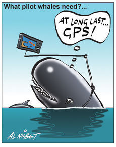 What pilot whales need?