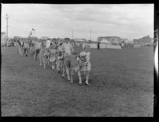 Children leading prize-winning calves