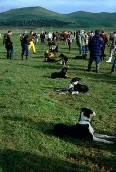 Farm dog sale