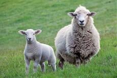 Animals (New Zealand)