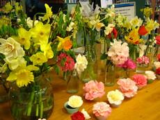Spring flowers display