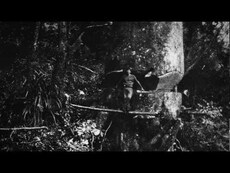 Matakohe kauri - roadside stories