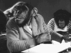 Monkey Tale