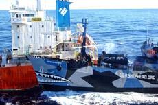 Sea Shepherd actions