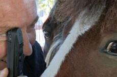 Optometrist eye checks pets for charity