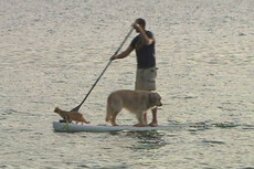 Paddle boarding gets hairy for Dunedin man and his pets