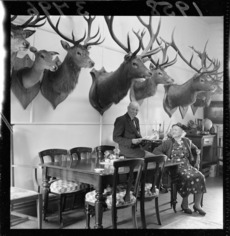 Hunting trophies in V E Donald's dining room