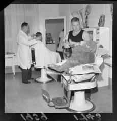 Godfrey Bowen shearing a sheep