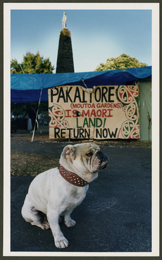 A bulldog in Moutoa Gardens during the occupation