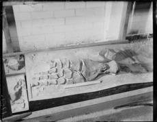 Fossil bones