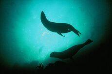 Seals, Piopiotahi Marine Reserve