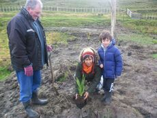 Planting native trees