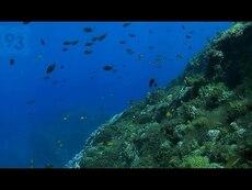 Raoul: a diver's view