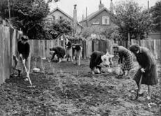 Women planting a garden